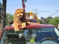 Lions pics 2012 053