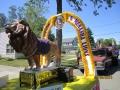 Lions pics 2012 064